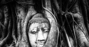 Buddha Abbild