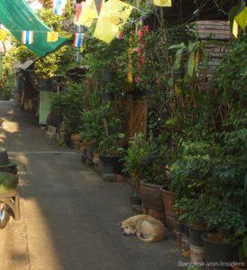 am Khlong