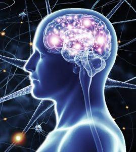 Gehirn eines Menschen